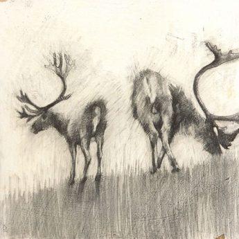 Wolves, Dogs, Deer, Bulls